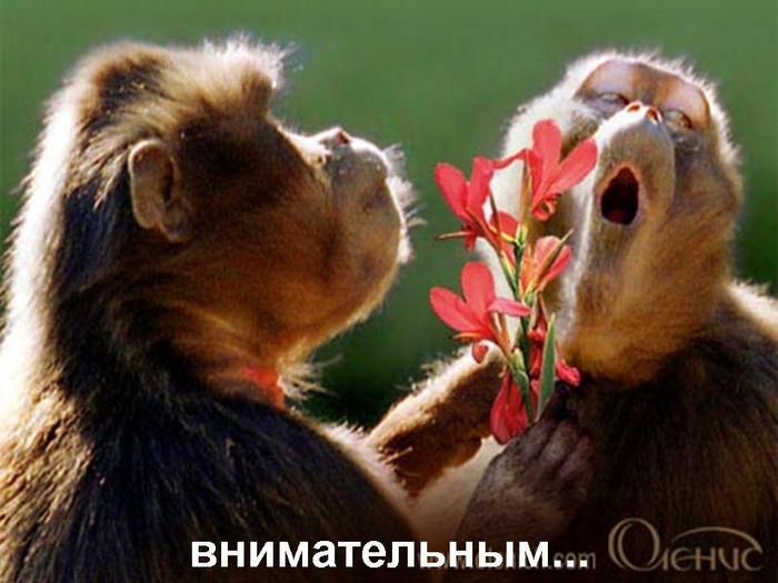 Дар Богу Светлана Копылова