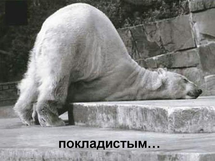 Забавные медведы (27 фото) - юмор, анекдоты...