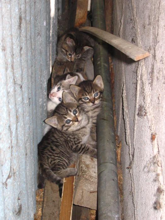 вислоухий кот ходит в туалет по большому а по углам по маленькому