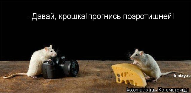 1203800400_kotomatrix_04 (640x313, 27Kb)