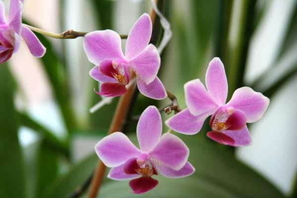 Та самая книга, которую Вы у нас искали как размножение орхидей домашних условиях фото наверняка, расположена ниже в...