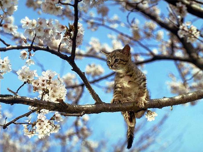 весенний котён (700x525, 155Kb)