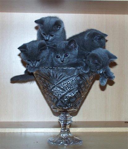 У меня уже готов Для тебя букет котов, Очень свежие коты.