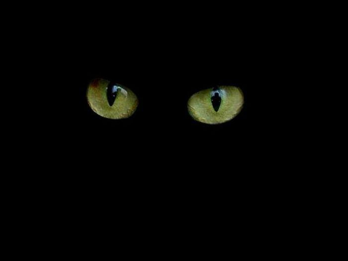 глазки (700x525, 6Kb)