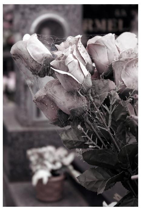 15236371_11805331_roses1 (466x699, 125Kb)