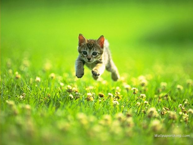 Прыгающий котик.