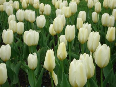 Рубрики цветы