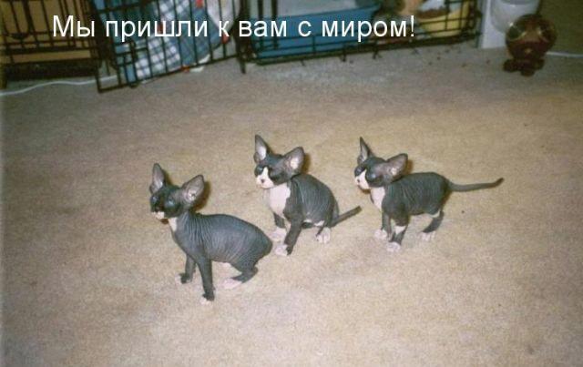 Прикольные картинки с животными (640x403, 50Kb)