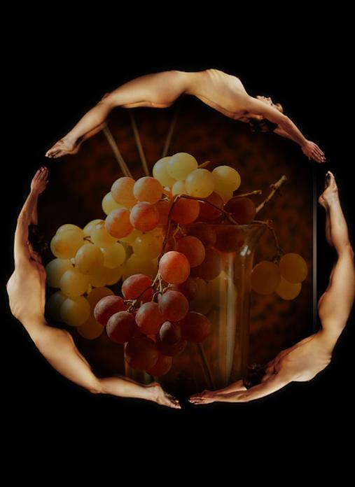 виноград (507x696, 186Kb)