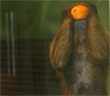 http://img1.liveinternet.ru/images/attach/b/3/23/54/23054686_cover.jpg