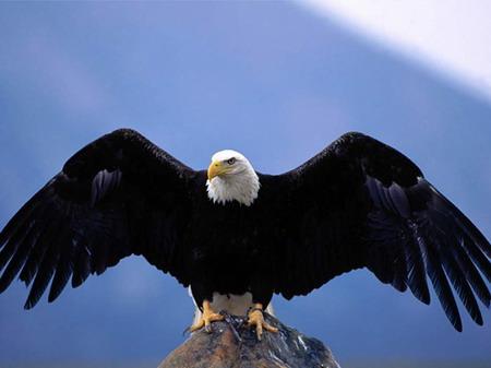 Орел зорким глазом оглядывал.  Горный орел скользил на могучих крыльях...
