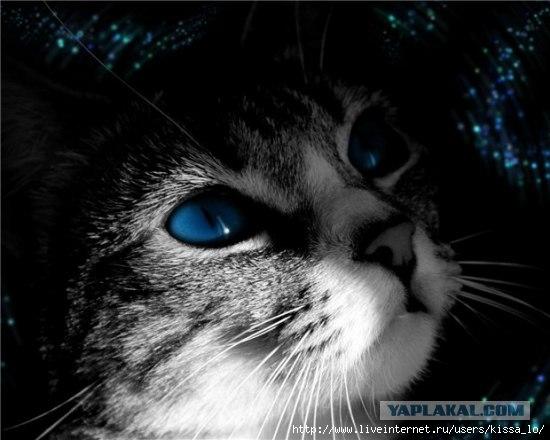Цвет глаз кошки.  Как красивы и выразительны глаза кошек.  Сколько оттенков цвета, сколько чувств.