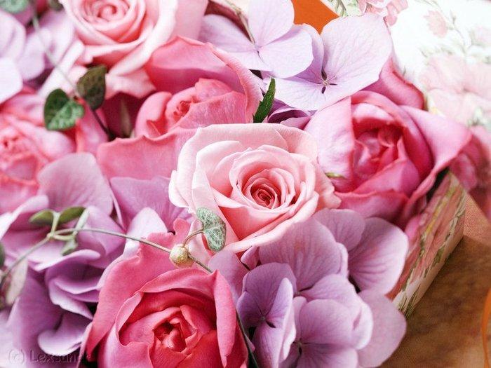 http://img1.liveinternet.ru/images/attach/b/3/27/450/27450186_1213813261_roses_super.jpg
