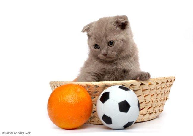 1213872404_002_cats (650x457, 33Kb)