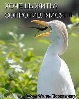 http://img1.liveinternet.ru/images/attach/b/3/28/211/28211461_5R.jpg