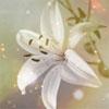 lily-bw (100x100, 13Kb)