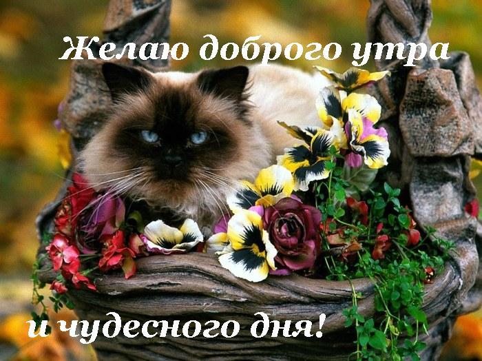 http://img1.liveinternet.ru/images/attach/b/3/28/484/28484346_22402176_dobrogo_utra_i_chudesnogo_dnya.jpg