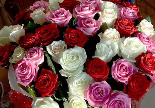Самые красивые цветы мира для тебя