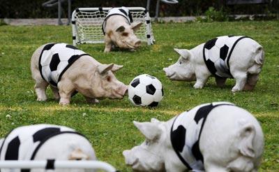 в футбол играют только свиньи, прикол