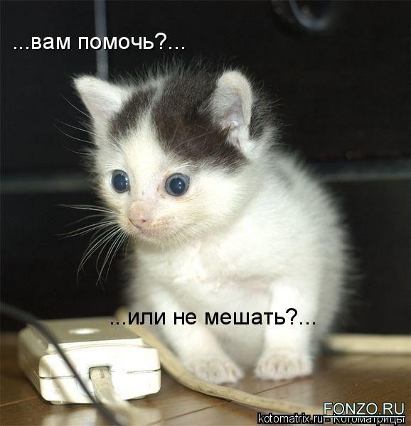 """Привет.  А у меня сегодня  """"кошачье настроение """", коты мои всю ночь..."""