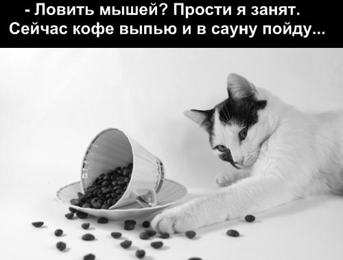 прикольные фото кошек прикольные фото кошек с надписями. прикольные фото...