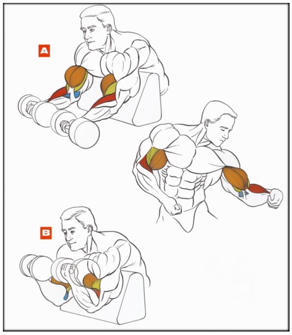 Как правильно качать руки в домашних условиях без гантель
