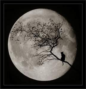 Луна (289x300, 13Kb)