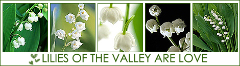 1192990746_18453485_Lilies_of_the_valley (470x129, 120Kb)