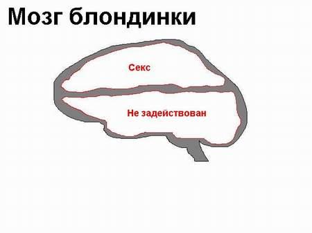 мужской и женский мозг,