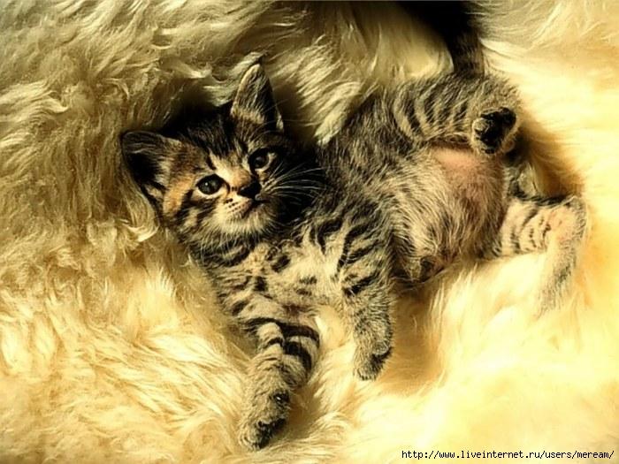http://img1.liveinternet.ru/images/attach/b/3/8/551/8551162_cats13.jpg