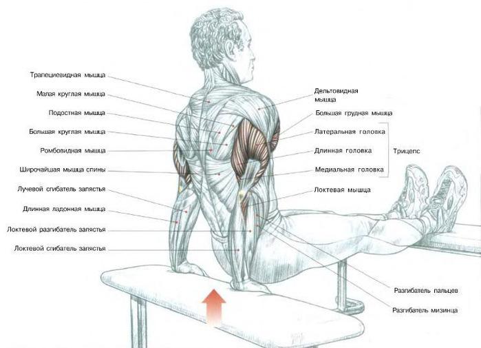 Как накачать грудные мышцы грудь гантелями - bodymaster.