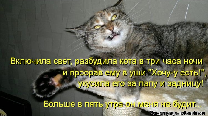 kotomatritsa_iC (700x392, 207Kb)