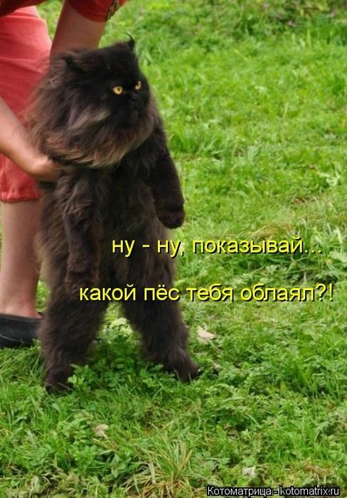 kotomatritsa_N (488x700, 280Kb)