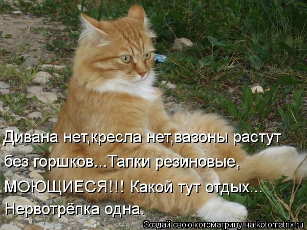 kotomatritsa_Nx (600x450, 165Kb)