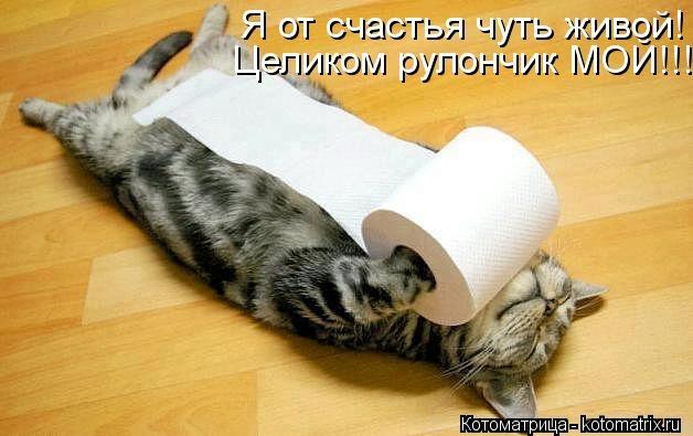 kotomatritsa_P5w (628x395, 107Kb)