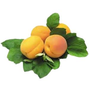 abrikos (300x300, 64Kb)