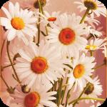 4360286_99px_ru_avatar_143149_buket_belih_romashek (150x150, 53Kb)