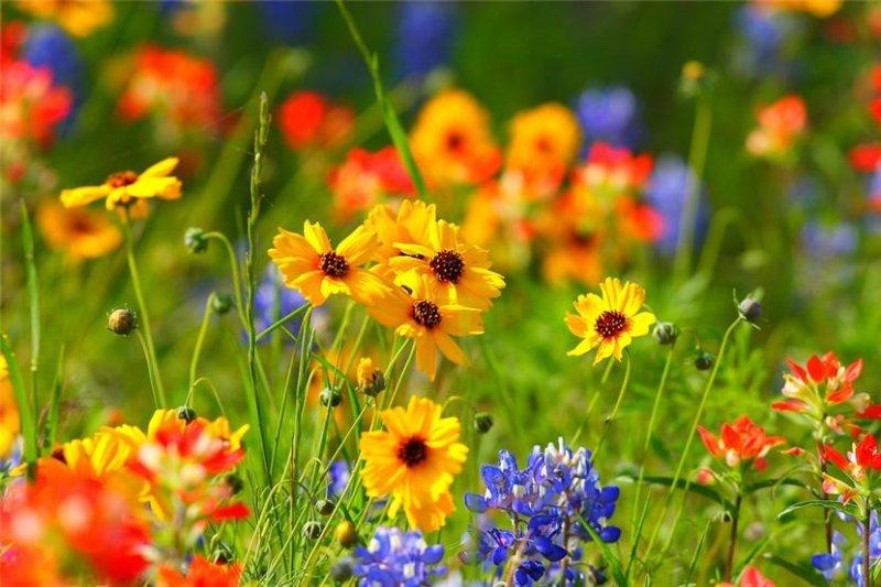 цветы в поле картинки