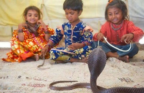 дети племени вади приручают змей 1 (550x355, 145Kb)
