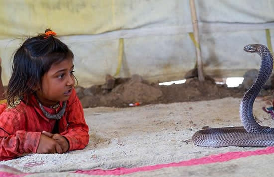 дети племени вади приручают змей 3 (550x355, 99Kb)