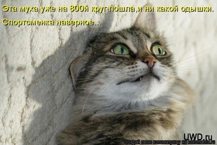 1312014513_kotomatrix_47 (700x467, 153Kb)
