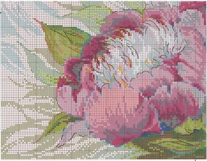 Stitchart-rozovye-piony3 (700x544, 403Kb)