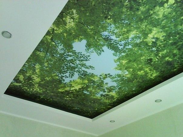 фотообои на потолке (604x453, 68Kb)