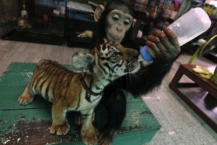дружба животных0 (700x467, 210Kb)