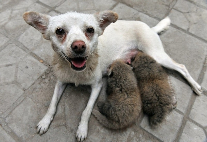 дружба животных2 (700x481, 216Kb)