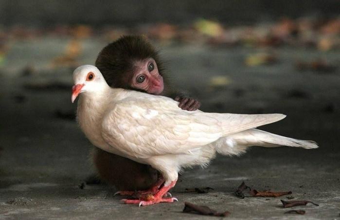 дружба животных4 (700x454, 185Kb)