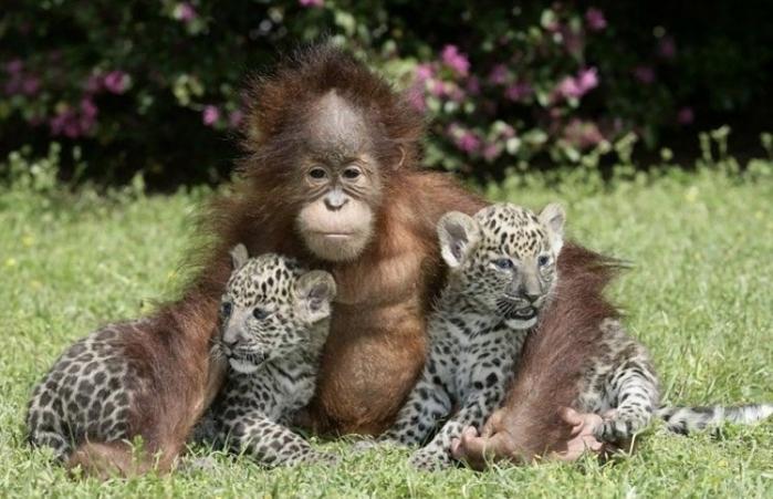 дружба животных7 (700x451, 232Kb)