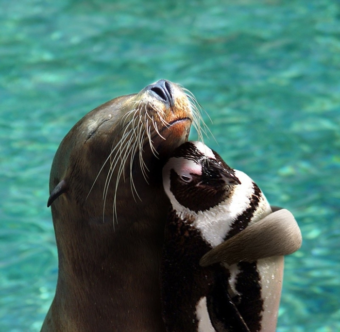 дружба животных13 (700x684, 279Kb)