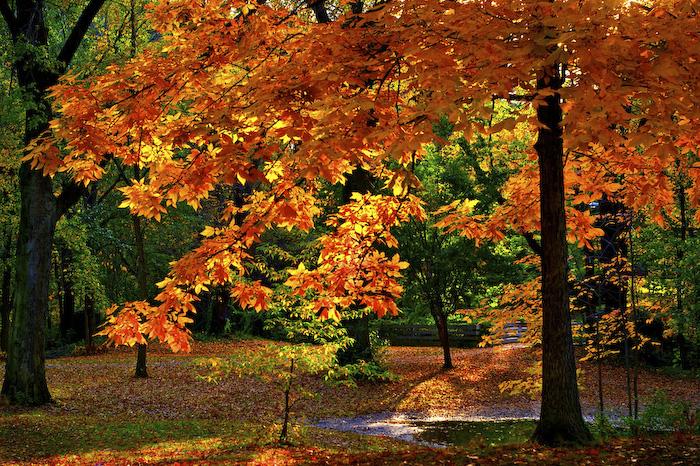 79219329_autumn14 (700x466, 409Kb)