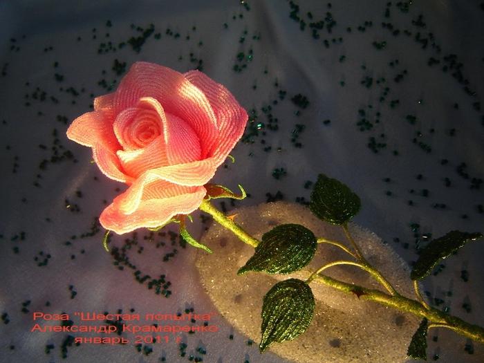 Francês rosa frisado de Alexander Kramarenko (13) (700x525, 269 KB)
